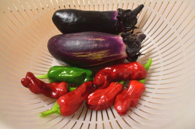 【体験談】ベランダ菜園初心者が野菜を育ててみたらこうなった! 気になる収穫量は?