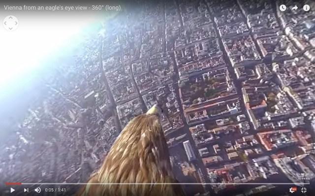 【疑似体験】これが鳥の見える世界…! ワシにつけた小型カメラから見える景色が超絶景