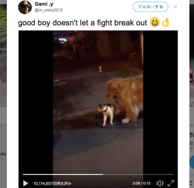 ネコ同士のケンカを優しく止めるワンコが尊い
