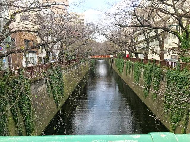 【悲報】日本列島、花見をすることすら許されず! この週末は冬の寒さに逆戻りする模様…