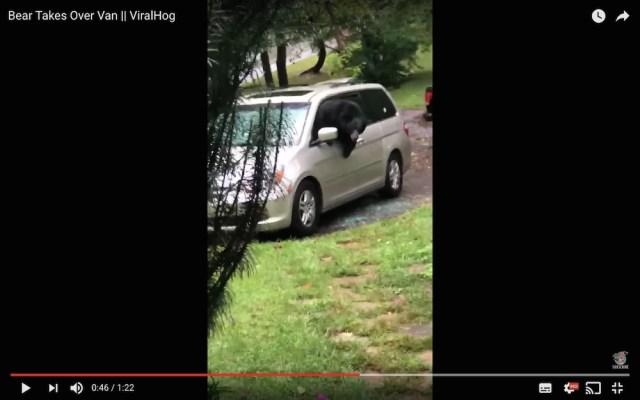 【恐怖】車の中にクマがいた…窓ガラスを突き破って出てくる動画が怖すぎる
