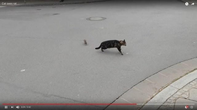 まるで実写版「トムとジェリー」 ネコがネズミを襲った次の瞬間…立場が逆転してアニメのような展開に!