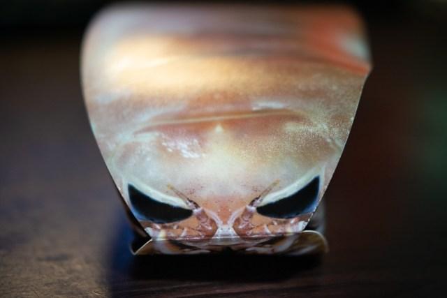 オオグソクムシ入り「超グソクムシ煎餅」はマジでお土産に最適かもしれない
