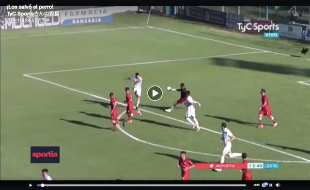 南米サッカーで可愛すぎる珍客がピッチに乱入 → 決定的なシーンを防いでネットで話題に!