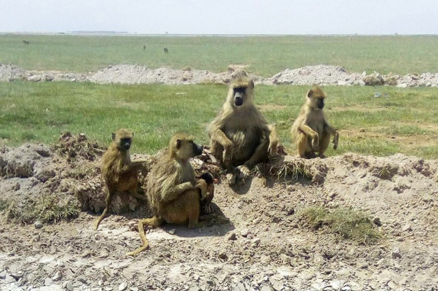 【絶景ガイド】ケニアきっての観光地「アンボセリ国立公園」に行ってきた! マサイ通信:第224回
