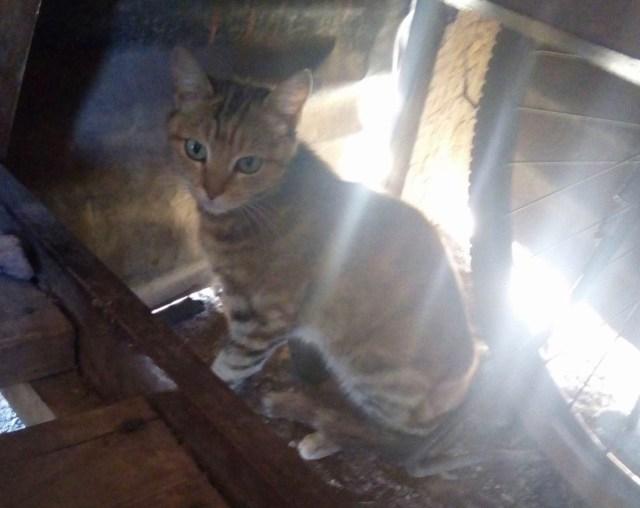 マサイの猫の鳴き声は「にゃうにゃう」で、犬は「ウォーウォー」だが、ライオンとゾウは… / マサイ通信:第227回