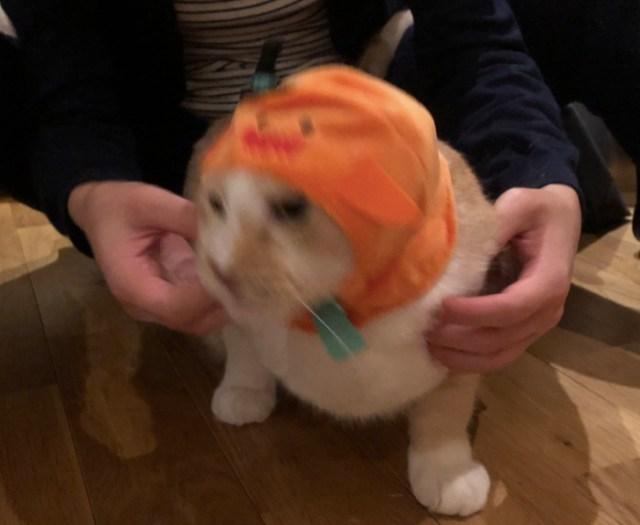 2月22日の「猫の日」は特に要注意! Twitterで『猫の写真へたくそ選手権』を見始めると止まらなくなるから気をつけろ!!