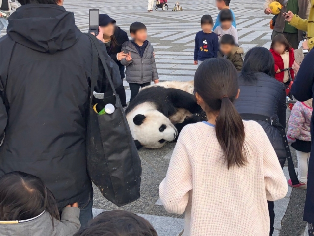 【注意】都内の公園にパンダが出没! 動物園から脱走か!?