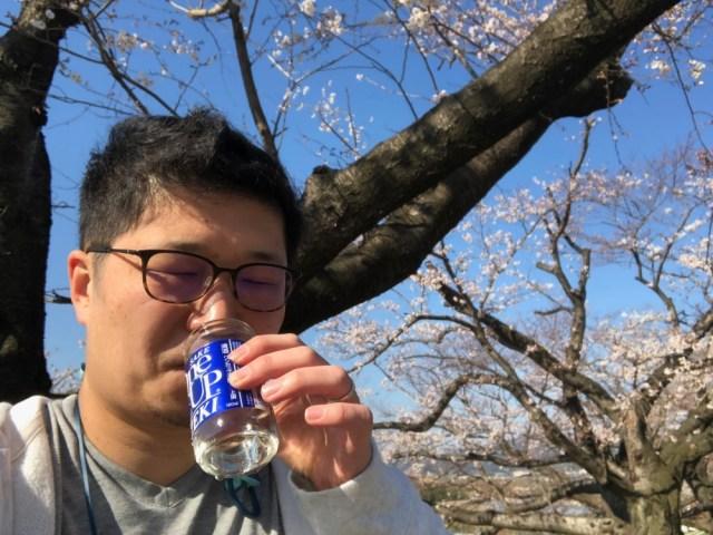 【検証】朝に京都で花見をしてから東京のオフィスに出社できるのか? やってみたらハードルが高すぎた / エクストリーム花見出社