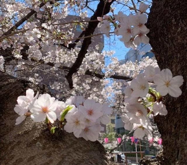 結果あり【競馬】7枠15番のダノンファンタジーに黄色信号! 桜花賞でグランアレグリアが買いな理由