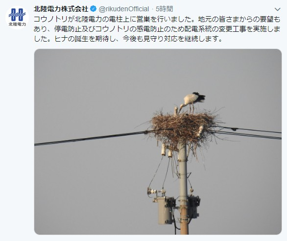 【神対応】コウノトリが電柱の上に巣を作る → 北陸電力の対応に称賛の声「男前すぎる」「地元の皆さん、電力会社ありがとう」