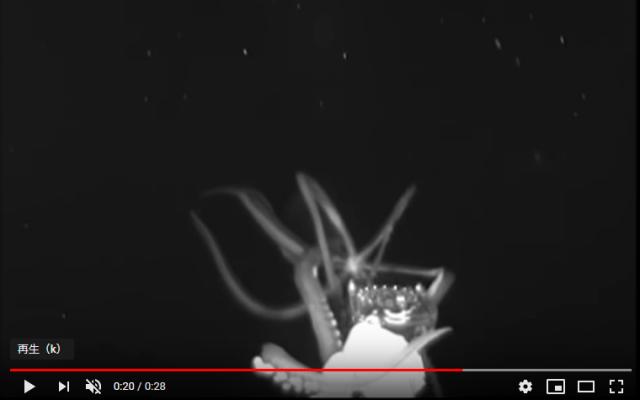 【激レア】ダイオウイカの捕食行動が撮影される / 7年ぶりの新しいダイオウイカ動画