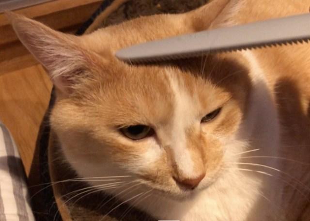 """人気すぎて商品到着まで3カ月待ち! 猫が気持ち良すぎてトロけるらしいグッズ『ねこじゃすり』を使ってみたら…記事的には """"もっとも困る反応"""" を示した"""