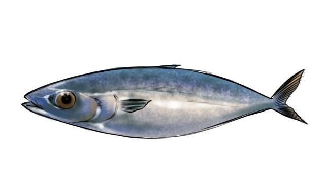【トラウマ体験記】サバを見るたびに蘇える、子供のころの恐怖体験 / サバ丸かじり男…あるいは九州の鯖の生食文化