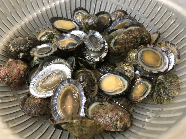【激ウマ簡単】海の男直伝の『カサガイごはん』レシピを大公開するのでメモの準備を!…ってことで海で採ってきたぞ
