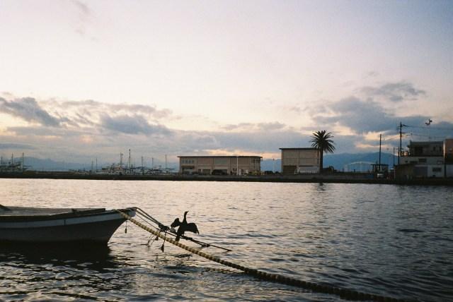 【オートフォーカスカメラの日】世界で初めてオートフォーカスを搭載したカメラを使ってみた → 令和は終わって昭和になりました