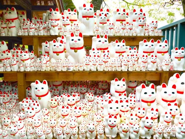 【福】招き猫発祥と言われる『豪徳寺』は猫好きの楽園 → 隠れ猫さんもいたよ〜!