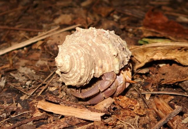 【貴重】宮古島の夜の自然が堪能できるナイトツアーに参加したら、天然記念物や絶滅危惧種にメチャメチャ遭遇してしまった!