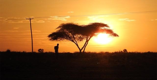 マサイ族に教えてもらったマサイの怪談「ねがいの木」が唐突すぎるストーリー展開で笑った / マサイ通信:第339回