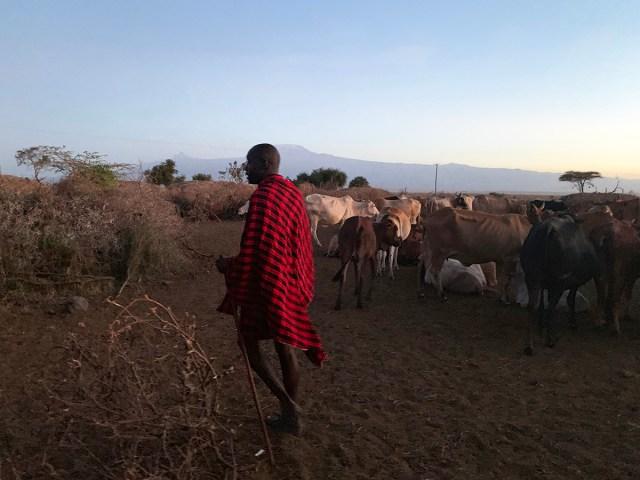 【異常発生】ケニアを襲う数億匹のバッタの大群、マサイ村は大丈夫か!?  マサイ通信:第345回