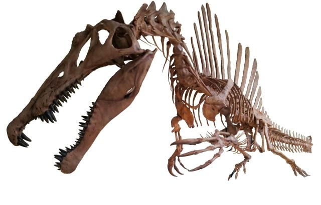 【弱そう?】スピノサウルスが本当はワニみたいだった可能性 / ジュラシック・パークⅢでT-Rexと戦ってたアイツ