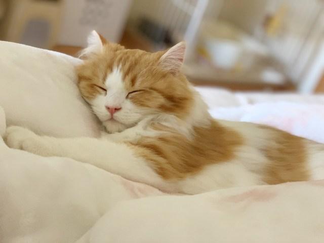 【神】寝ている猫だけを集めた写真イベント「ねこにすと」がコロナで中止 → ネットで無料公開へ! 600匹の猫たちがひたすら惰眠を貪る!!