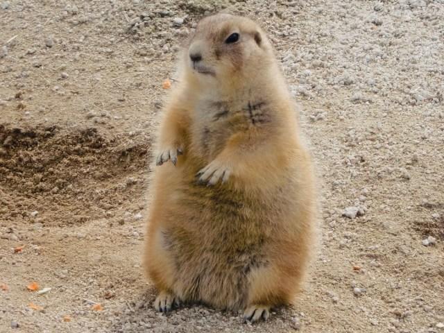 【無料】ライブ配信&動画配信サービスで全国の動物園を応援! 実際に行くなら…のイチオシ動物園もご紹介