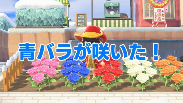【あつ森】「ついに青バラが咲いた!」の巻 / 第10回「あつまれ どうぶつの森」日記