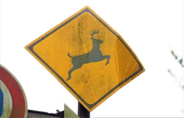 「鹿」の道路標識についてモノ申す! 角の向きが逆でしょ!! → 国交省に問い合わせてみたところ、驚きの事実が発覚