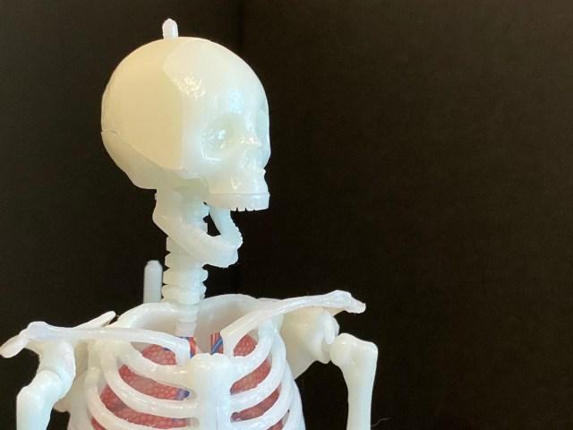 【学研の人気付録】やたら多機能な人体模型を作れるキットがリニューアル発売 / キュートなガイコツをどうぞご自宅に
