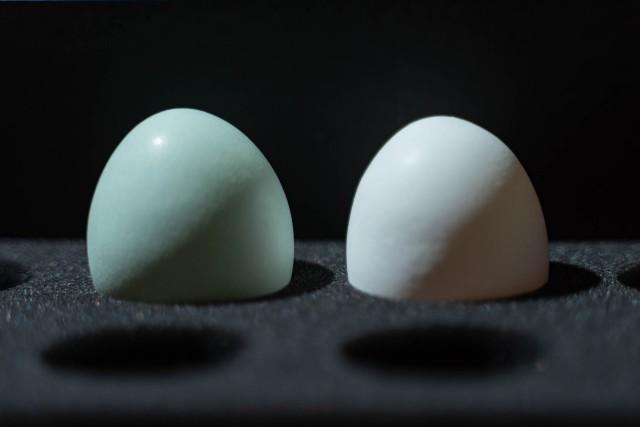 1個800円の超高級な青い卵 / 青さの理由が気になったので調べてみた