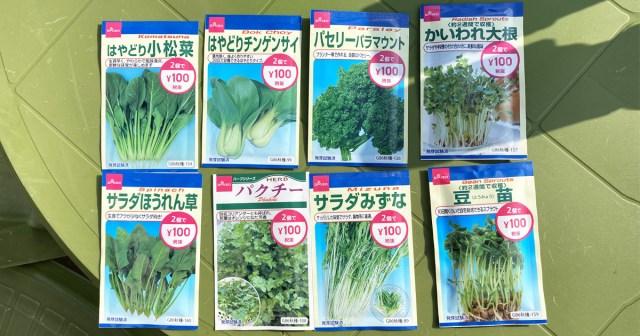 【100均検証】ダイソーの「花と野菜の種(2袋で100円)」を軽い気持ちで蒔きまくった結果…