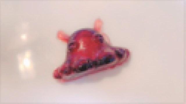 さかなクンの『深海魚研究所』でメンダコとダイオウイカを作ってみた!