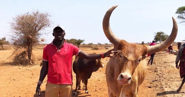 こんな立派な牛、見たことない! 思わず記念に2ショット撮ってもらっちゃいました!! マサイ通信:第422回