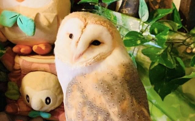 フクロウに会える中華料理店『福楼』に行ってみた / 横浜中華街『福楼』