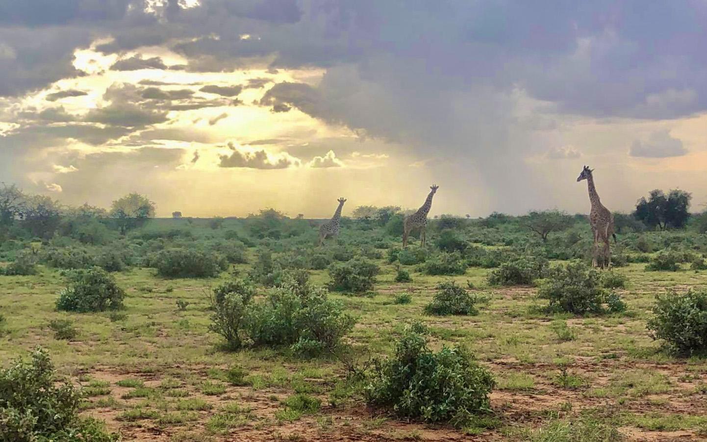 マサイ族がiPhoneで撮影したマサイ族の超日常写真集パート6(画像補正版)/ マサイ通信:第457回