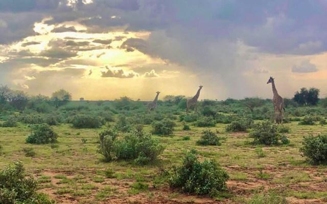 マサイ族がiPhoneで撮影したマサイ族の超日常写真集パート6(画像補正版)/ マサイ通信:第458回
