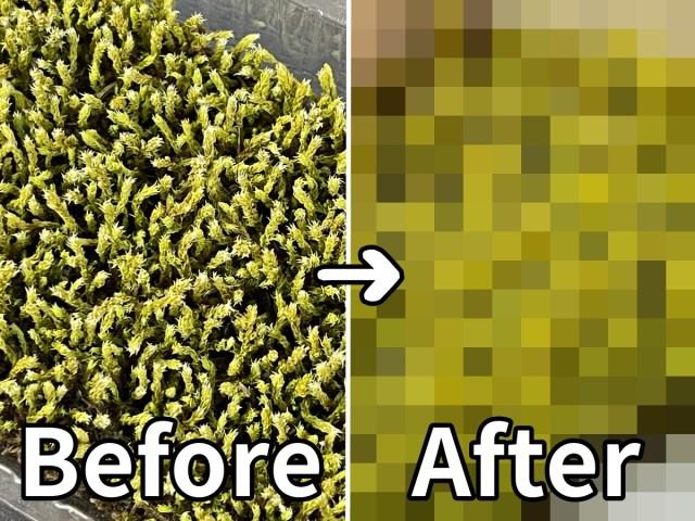 壊滅的にグリーンを育てられない私が「苔盆」で見た奇跡! 一瞬のビフォーアフター