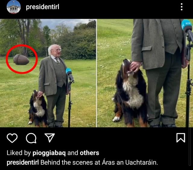 「子犬に甘噛みされながら会見を続けるアイルランド大統領」の背後のデカいどんぐりの正体