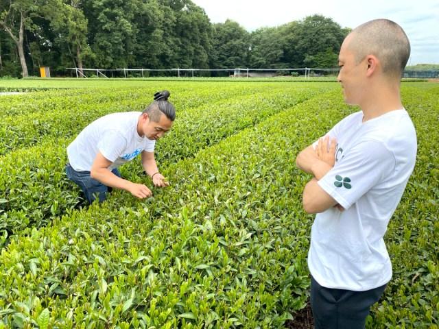 【実録】摘みたての茶葉からお茶を作ろうとしたら「伊藤園」のヤバいやつに激ギレされたでござる
