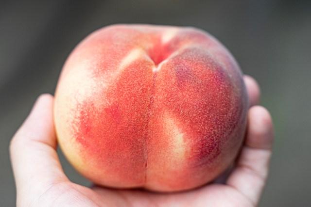 【デリシャス】米、豪のソフトボール監督が大絶賛した福島の桃「あかつき」を食べてみた