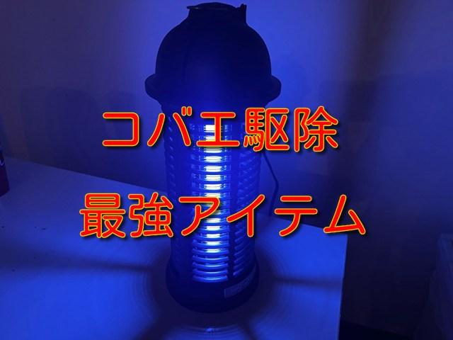 【閲覧注意】コバエ対策に「電撃殺虫器」を買って試してみた結果 → エグいくらいの効果が…!