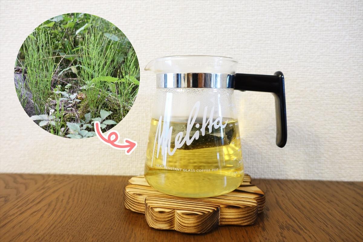 【スギナ茶】雑草からお茶が作れるって本当? とっても簡単な作り方もご紹介するぞ!